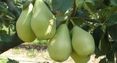 Αδυνάτισμα με αχλάδια